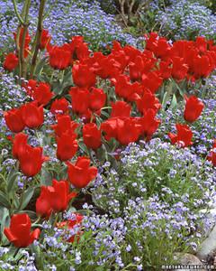 la101507_0406_tulip1.jpg