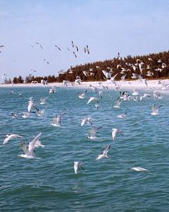 la98728_0601_birds47.jpg