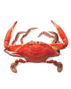 mld105528_0710_crab1.jpg