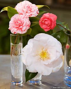 3124_022708_camellias.jpg