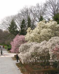 3177_050108_magnolias.jpg