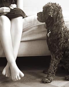 large-poodle-md108429.jpg