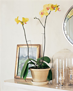 mla103020_0208_orchid.jpg