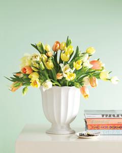 mld106963_0411_tulips.jpg