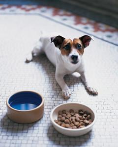 pe_nutrition_ml709a01.jpg