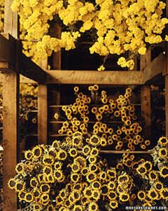a98035_1101_sunflowers.jpg