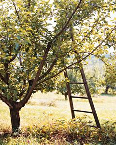 orchard05-a103601-1014.jpg
