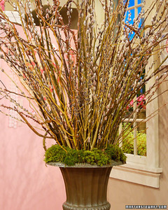 3112_021308_pussywillow.jpg