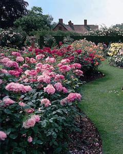 3159_041008_rosegardens.jpg