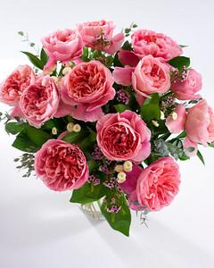 6104_021611_rose_phoebe.jpg