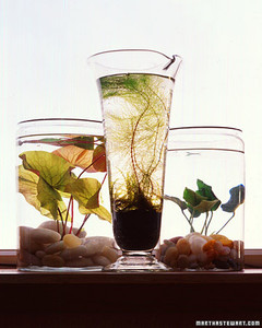 Indoor Water Gardens Indoor water gardens martha stewart indoor water gardens workwithnaturefo