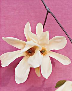 mla103227_0408_magnolia.jpg