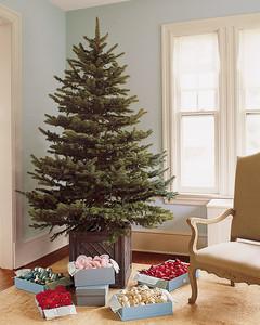 potting christmas trees - Martha Stewart Christmas Trees