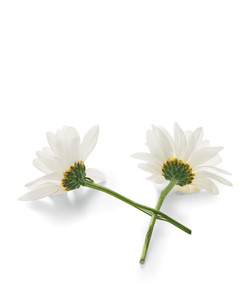 mld105719_0610_flowerhtb.jpg