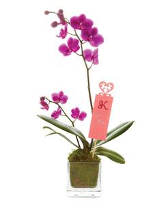 mld106764_0211_flowers01.jpg