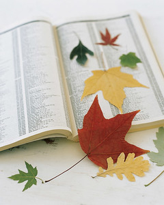la_1098_leafplacemats_ht1.jpg
