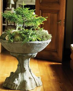 Moss Garden 0811mld106442