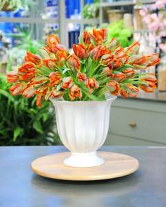 6126_033111_flowers_tulips.jpg