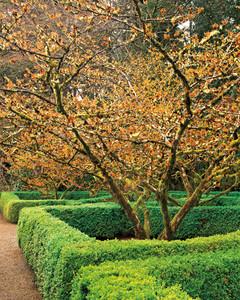 mla_a103_0111_garden_923_1.jpg