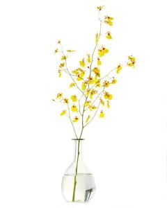 mld106561_0111_flowersilo1.jpg