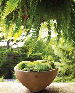 moss-garden-0811mld106442b.jpg