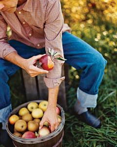 mla103601_1008_apple_farmer.jpg