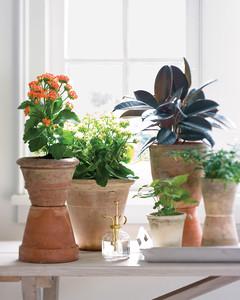 mld103886_0209_houseplant12.jpg