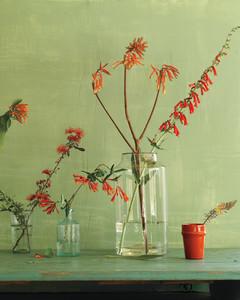 buzzworthy-plants-md20080319.jpg