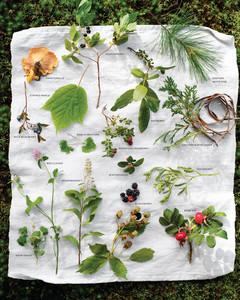 foraging-guide-0811mld106417.jpg