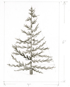 darker pencil drawing of christmas tree