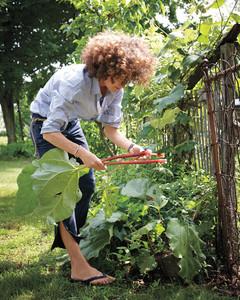 garden-party-rhubarb-md107635.jpg