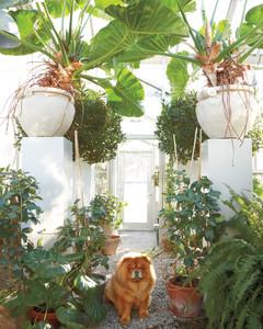 gardening-ferns-dog-mld107179.jpg