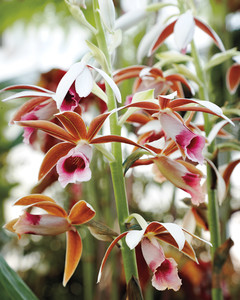 gardening-orchids-2-mld107179.jpg