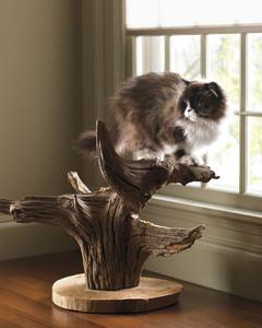mmld10315_0311_7_cat_tree_043.jpg
