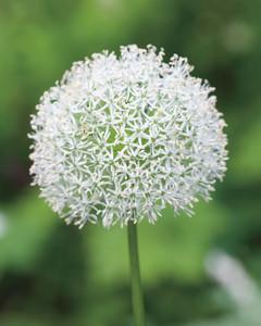 white-garden-0511md106038-078.jpg