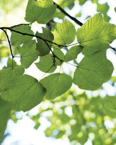 foliage-foraging-0811mld106417.jpg