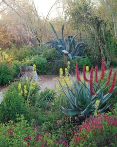 Hummingbird Gardens Md20080319