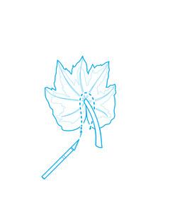 march-2014-p042-garden-leaf-02.jpg