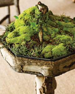 Moss Garden Tree 0811mld106442