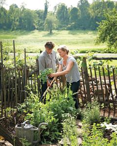 garden-party-working-2-md107635.jpg