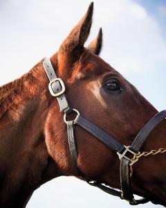 steeplechase-horses07-mld108130.jpg