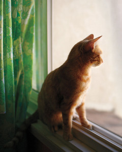 cat-0911mbd107699-getty102358356.jpg