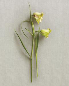 flower-still-life1-170-mld108799.jpg