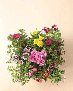 flowers-wilt-proof-0811mld107443.jpg