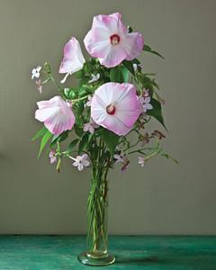 hardy-hibiscus-0711mld106426-070.jpg