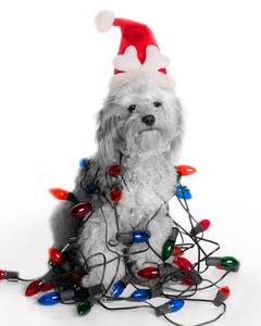 Santa Pets 2010 Photo Contest