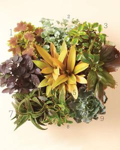 plants-wilt-proof-0811mld107443b.jpg
