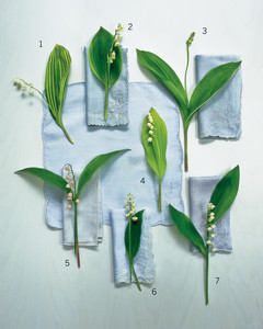 mla104117_0411_lily_of_valley_glossary.jpg