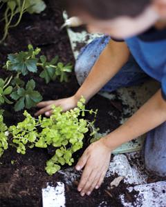 planting-detail-0411mbd106612treewell208.jpg