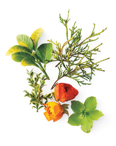 chartreuse-orange-yellow-plants-mld108315.jpg